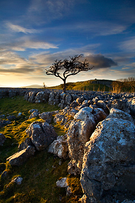 Lone Tree and Limestone Pavement - Sunset