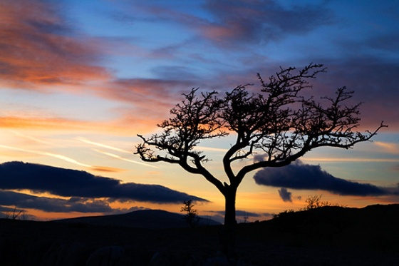 Lone Tree at Sunset above Conistone