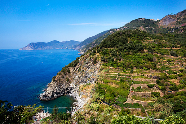 Terraced Vineyards at Corniglia