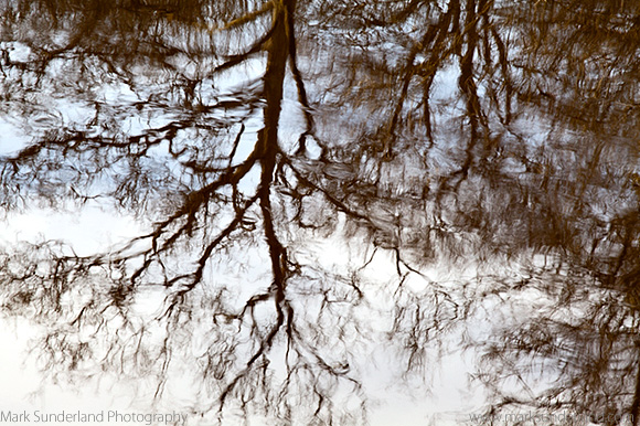 Winter Tree Reflected in a River
