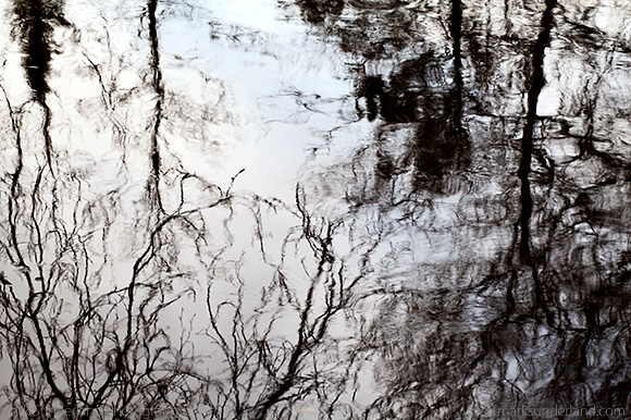 Winter Trees Reflected in a River