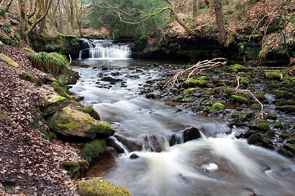 Waterfall on Harden Beck in Goitstock Wood