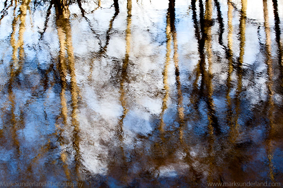 Reflections of Winter Trees