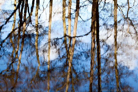Tree Reflections and Blue Sky