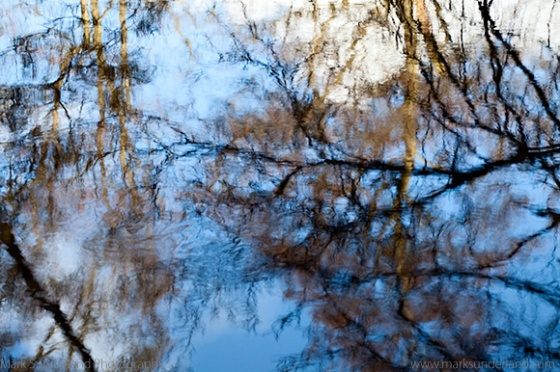 Reflected Branches and Sky