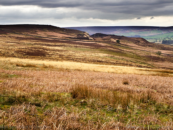 Clints Moor from Druids Plantation Ilton near Masham North Yorkshire England