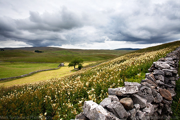 Meadow with Field Barn at Gauber near Ribblehead