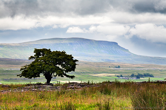 Lone Tree and Pen y Ghent from Gauber