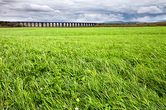 Ribblehead Viaduct across a Meadow