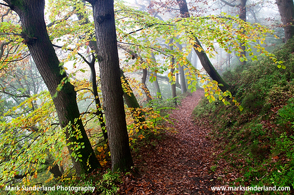 Autumn Trees along the Path near Raven Scar Hackfall Woods Grewelthorpe North Yorkshire England
