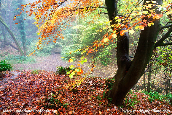 Hackfall Woods Grewelthorpe North Yorkshire England