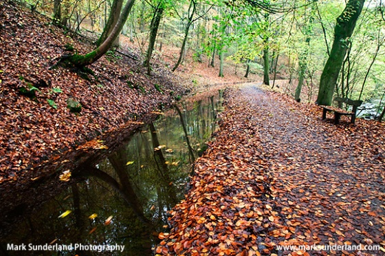 Autumn Colours along the Main Path from the Sawmill Entrance Skipton Woods Skipton North Yorkshire England
