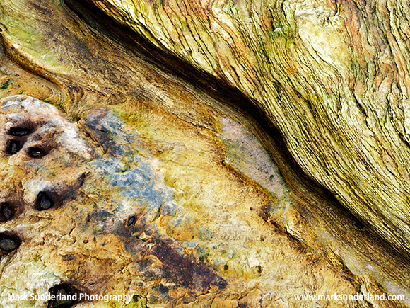 Rock Detail on Boulmer Beach Northumberland Coast England