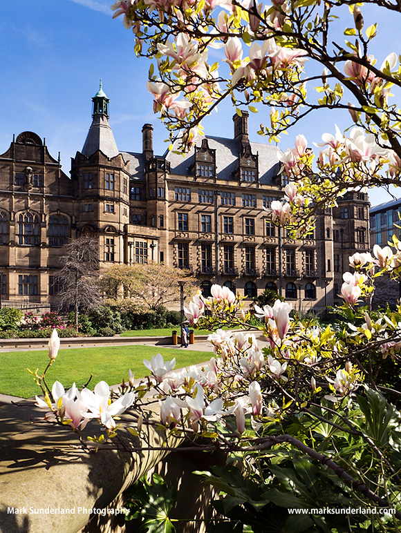 Peace Garden and Town Hall in spring Sheffield South Yorkshire England