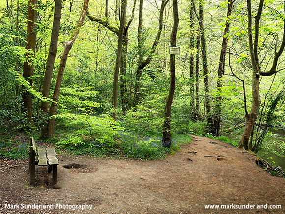 Wooden Bench in a Clearing in Spring Wood