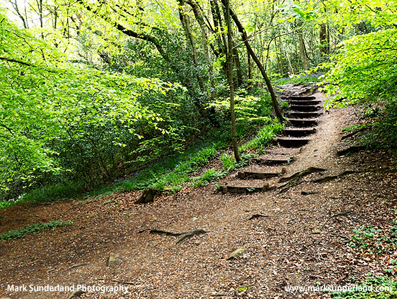 Steps on the Path in Spring Wood
