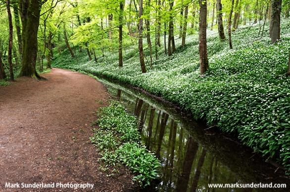 Skipton Woods Skipton North Yorkshire England