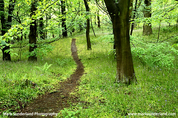 Pathway through Spring Woodland in Middleton Woods Ilkley West Yorkshire England