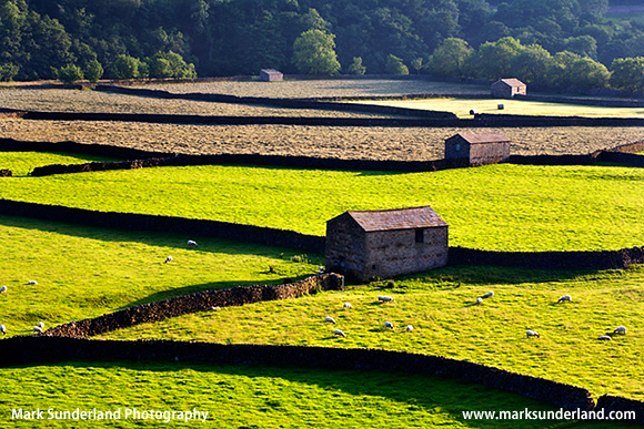 Field Barns at Gunnerside Swaledale Yorkshire Dales England
