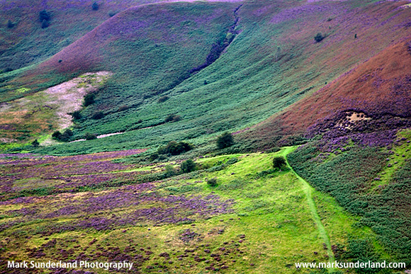 Colourful heather in summer at the Hole of Horcum North York Moors Yorkshire England