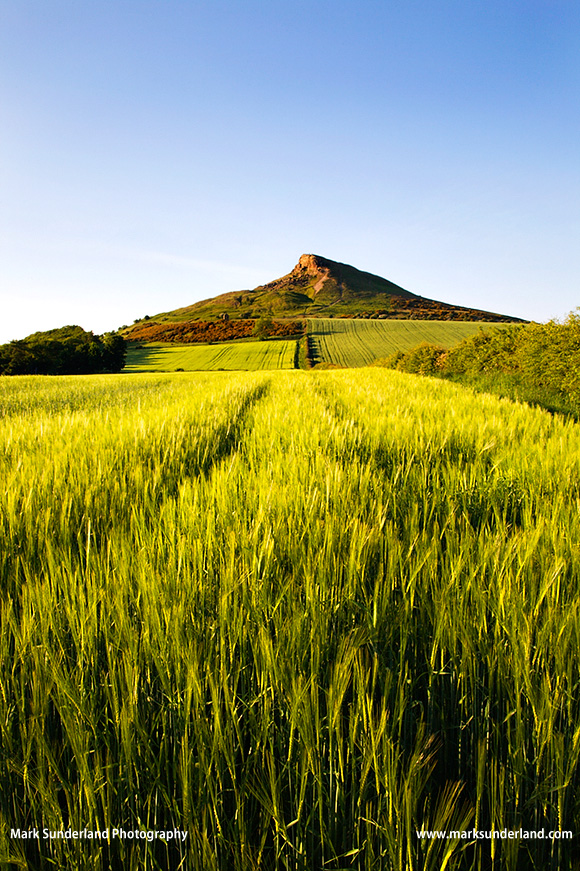 Roseberry Topping on a Summer Evening North York Moors Yorkshire England