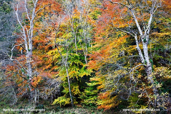 Atumn Colours in Strid Wood near Bolton Abbey Yorkshire England