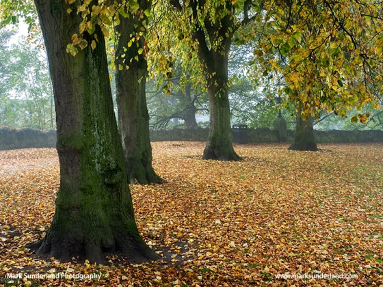 Carpet of Fallen Leaves in Knaresborough Castle Grounds in Autumn Knaresborough North Yorkshire England
