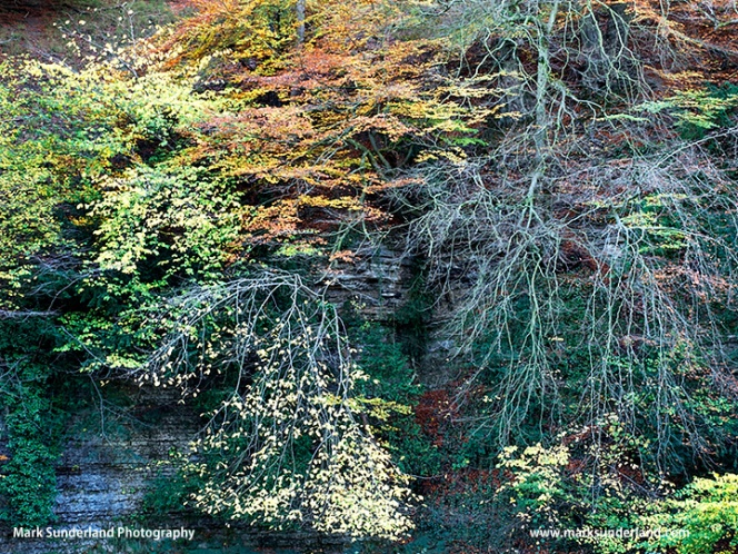 Autumn Colours in Seven Bridges Valley at Studley Royal