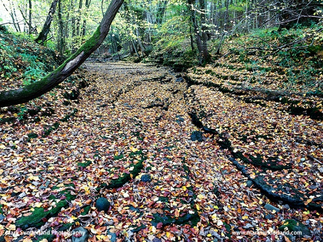 Autumn Leaves on a Riverbed in Chinese Wood near Ripon