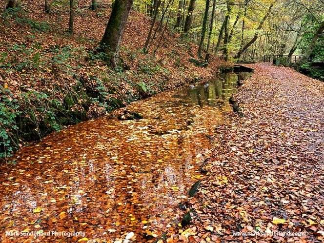 Skipton Woods in Autumn