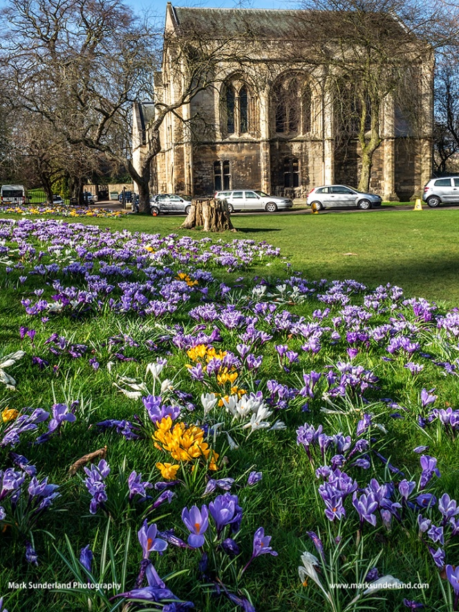 York Minster Library in Spring