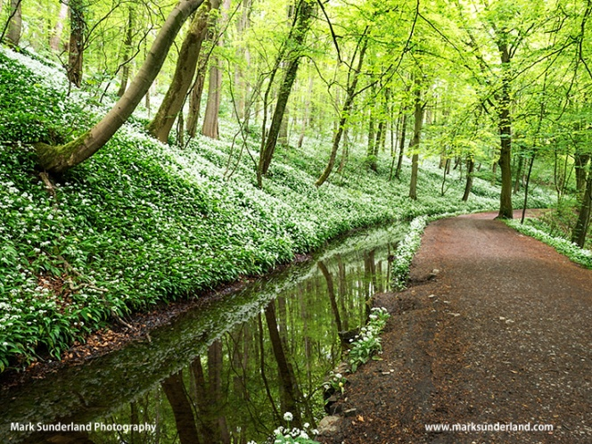 Skipton Woods in Spring