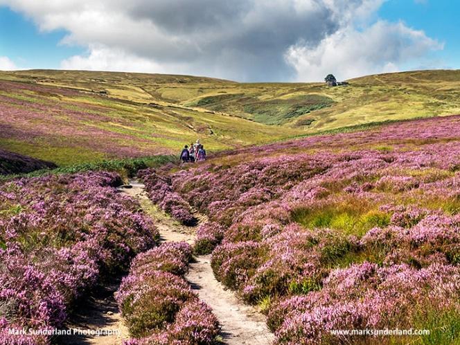 The Brontë Way Crossing Haworth Moor towards Top Withins on the Horizon