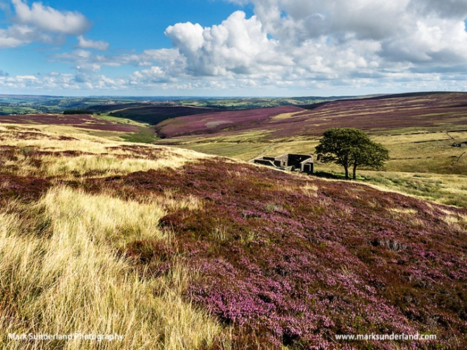 Top Withins on Haworth Moor in Summer