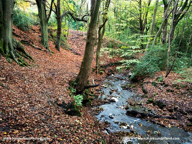 Birk Beck in Autumn Harrogate