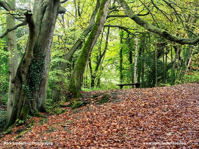 Birk Wood in Autumn