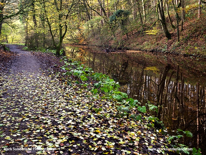 Skipton Castle Woods in Autumn