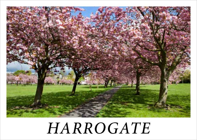 Cherry Blossom on The Stray at Harrogate