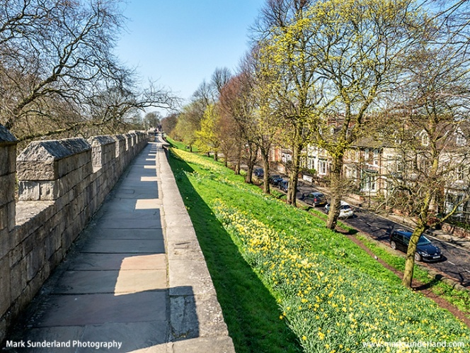 York City Wall in Spring