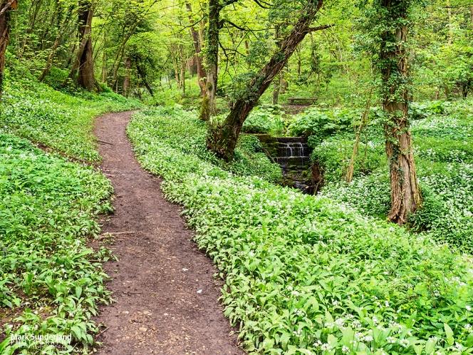Footpath through woodland at Mackintosh Park in the Nidd Gorge near Knaresborough