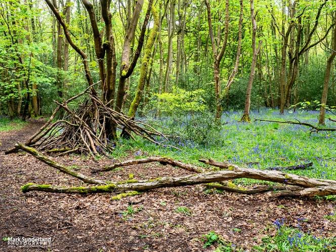 Bluebells in Nidd Gorge Woods