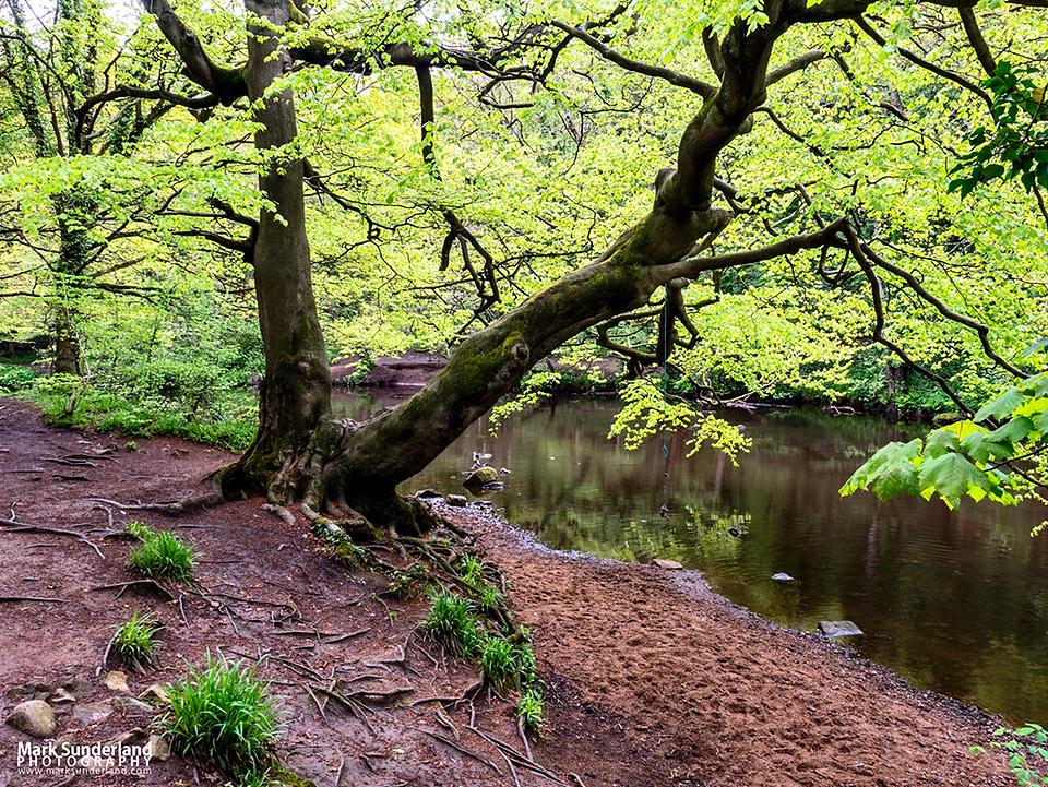 Last Week's Shoot – Nidd Gorge Woods
