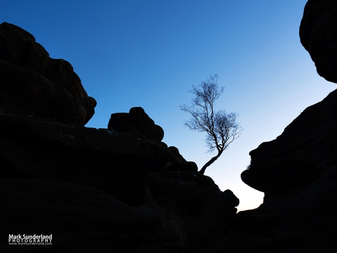 Windswept tree silhouetted against a twilight sky at Brimham Rocks
