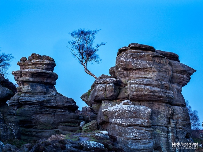 Gritstone rocks and lone tree in twilight at Brimham Rocks