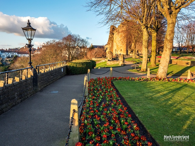 Spring flowers and the Kings Tower at Knaresborough Castle at sunset